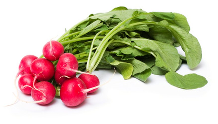 Radishes are susceptible to black root rot disease.