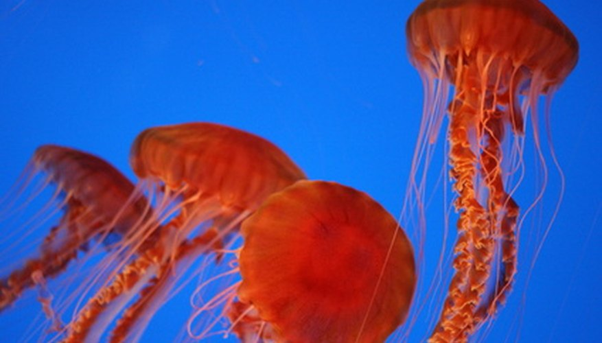 Physicians in coastal regions around the world use vinegar to treat jellyfish stings.