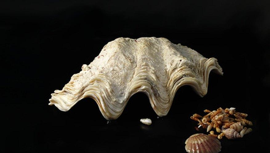 Las perlas se crean cuando un molusco libera un saco de perlas que contiene un irritante.