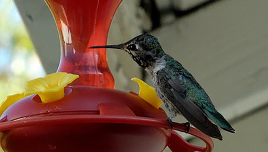 Hummingbird feeders are a delightful additon to any home.