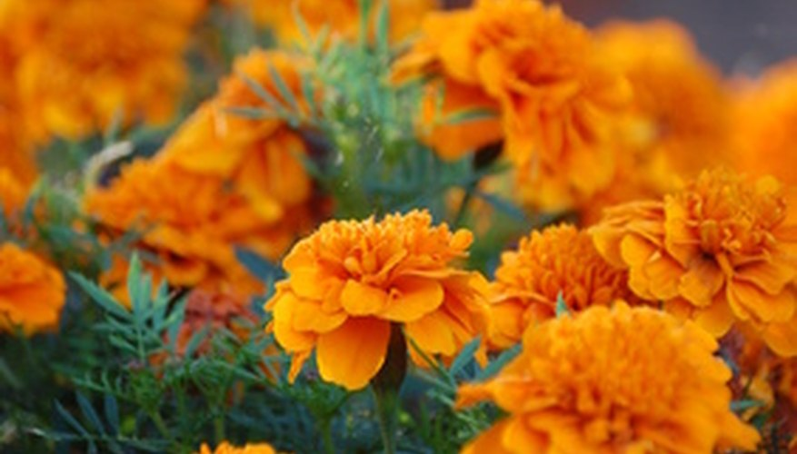 Orange flowers give the feeling of power.