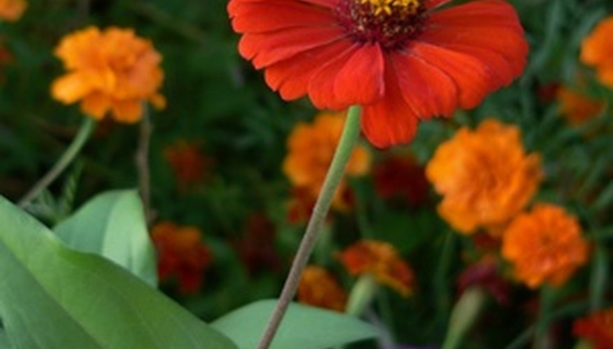 Prevent Weeds In A Flowerbed With Plastic Liner