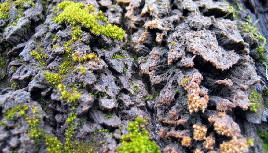 Lichens can be found in a variety of colors.