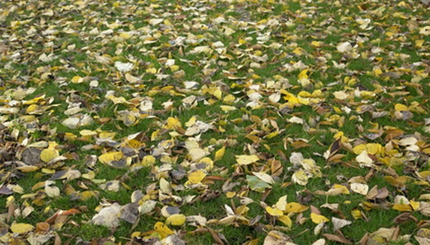 Students can gather leaves for their classroom compost pile.