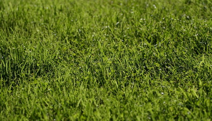 Ammonium nitrate can make lawns turn green quickly in the spring..