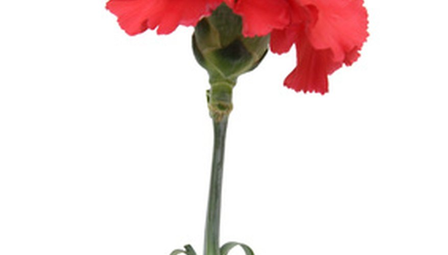 A carnation is a common type of red flower.
