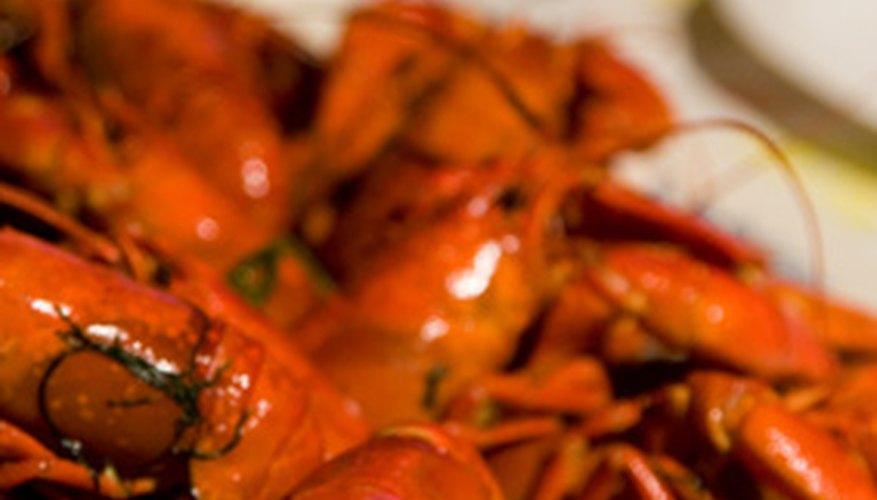Los cangrejos de río se encuentran a lo largo de Estados Unidos en estanques, lagos, corrientes y ríos.