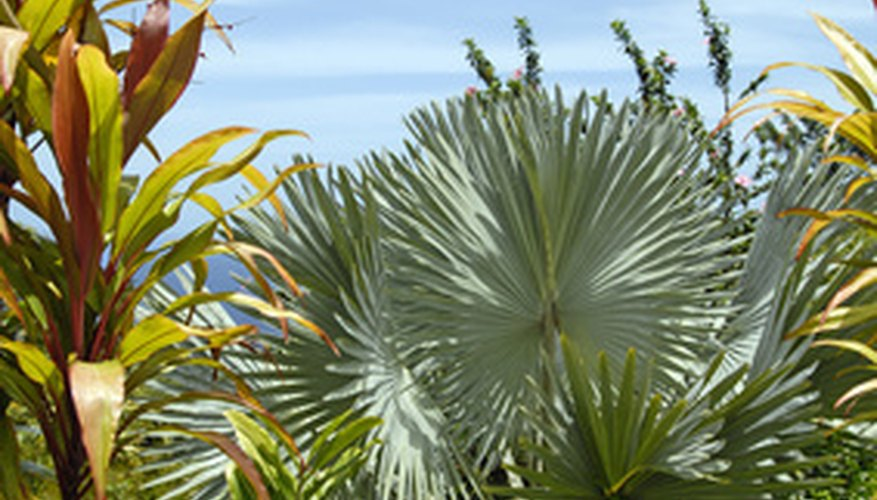 Hawaii's tropical climate hosts many tropical plants.