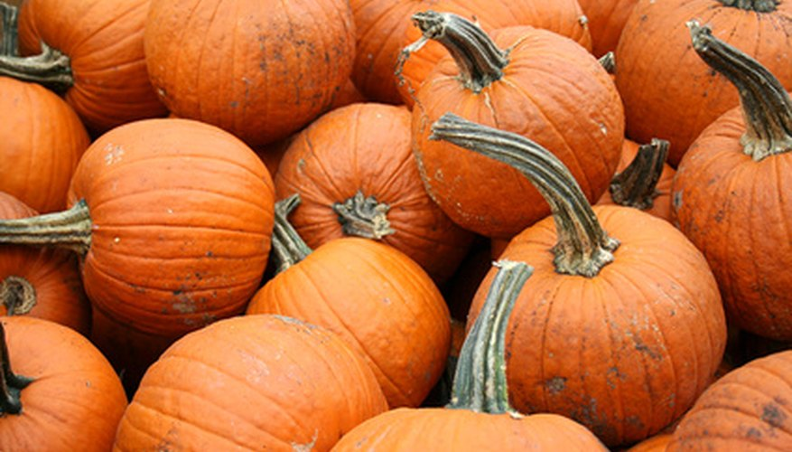 Pumpkins are a major crop in the southeast.