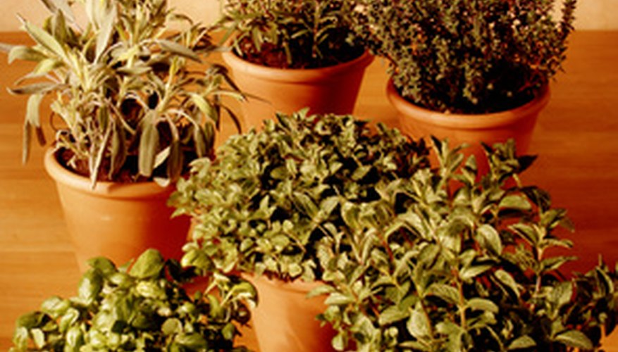 An assortment of potted herbs
