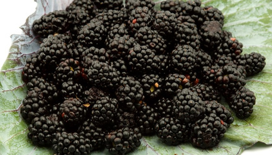 Fresh blackberries are used in jams and syrups.
