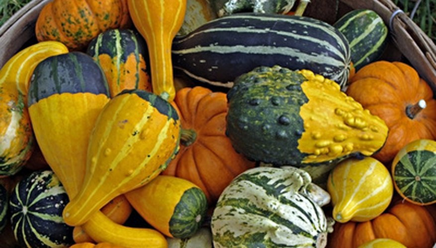 Replanting hybrid squash seeds can produce new and unusual gourds.