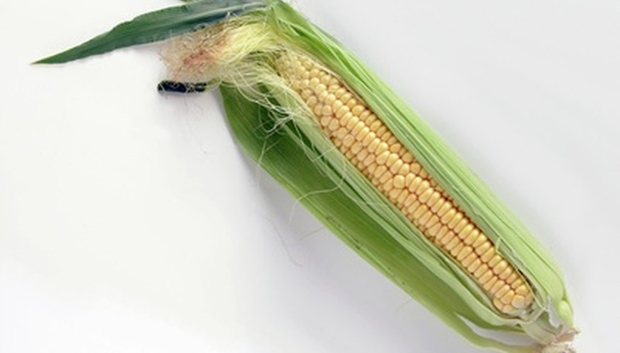 Corn (Zea maz) is a monocot.