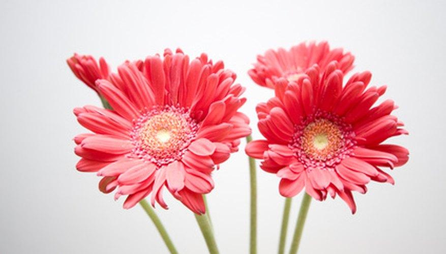 Elige flores locales para reducir los costos de la boda.