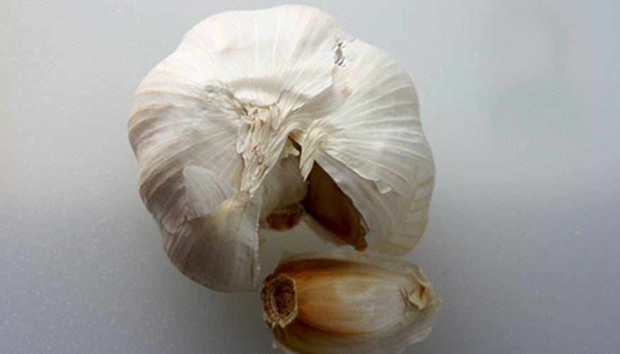 Bulbs like garlic are able to generate new plants, a lot like seeds.