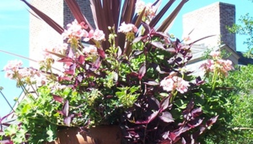 Garden urns allow plenty of space for multiple plants.