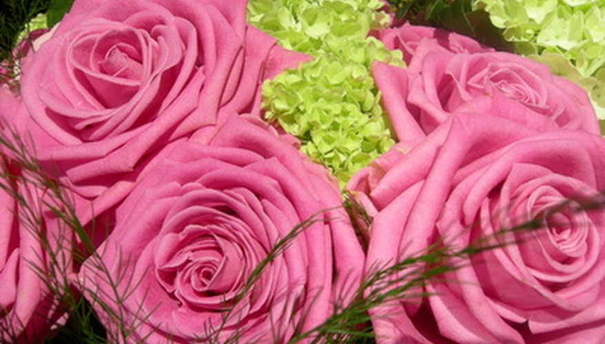 Roses prefer natural sunlight for optimum growth.