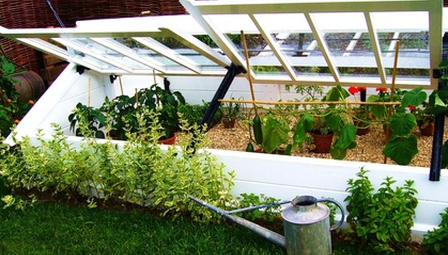 Cold frames are a perfect structure for establishing young ivy plants.