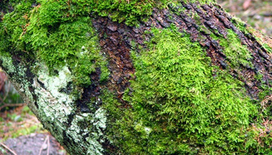 Moss growing in its shady and damp environment