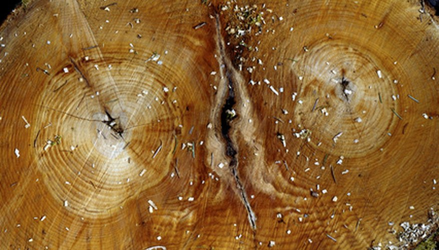 Each tree trunk and branch displays annual growth rings.