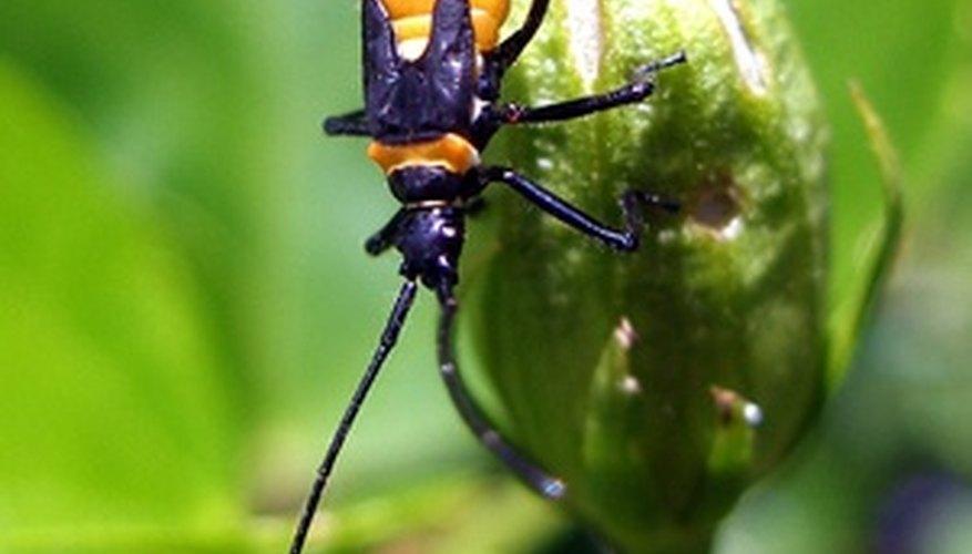 Un escarabajo que se guía por medio de antenas puede ser la inspiración para un robot hecho en casa.