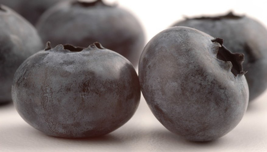 Blueberries are easily grown from seed.