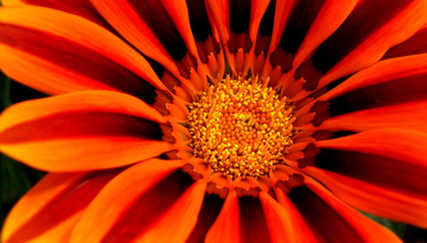 Gazania is only one of the plants suitable for small borders.