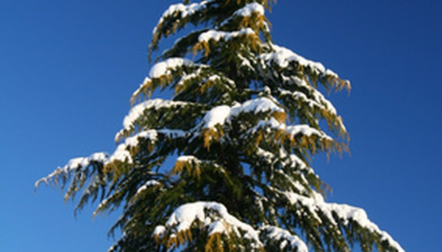 Evergreens retain their color throughout winter.