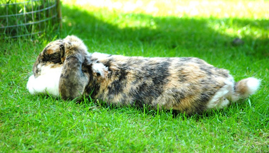 How to keep rabbits out of the garden yard garden guides - How to keep rabbits out of a garden ...