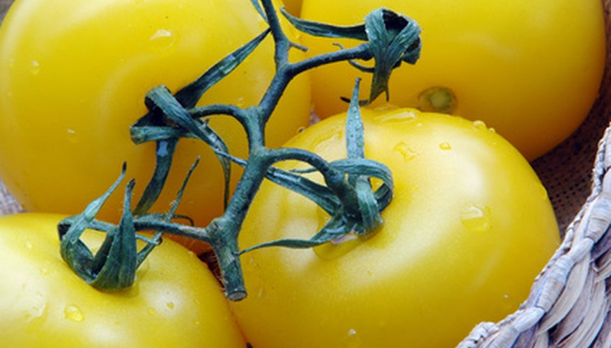 Yellow tomatoes are higher in Vitamin A and beta carotene than red ones.