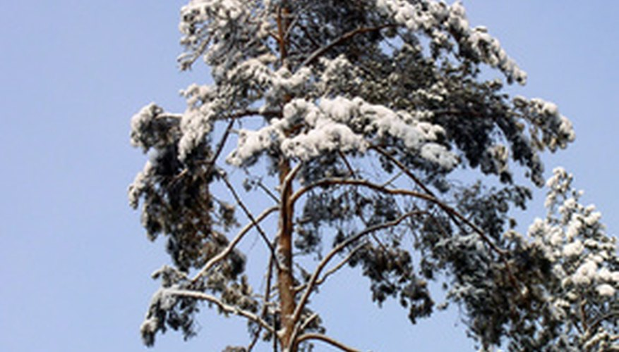 Trees can be damaged during the winter like any other plant.