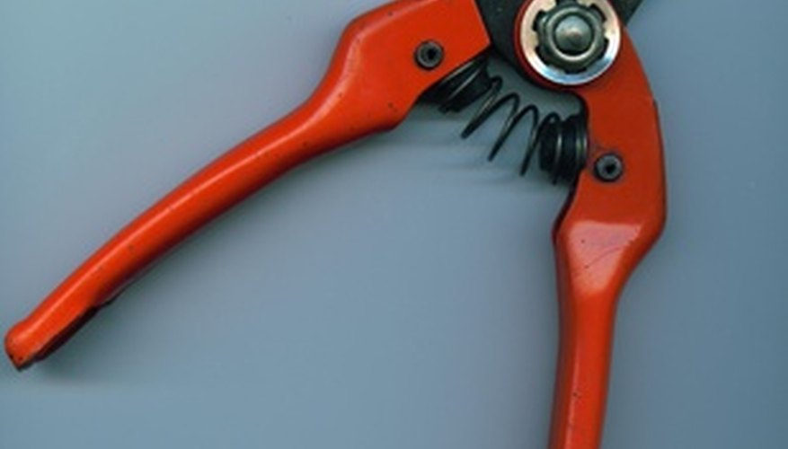 Use sharp pruning shears.