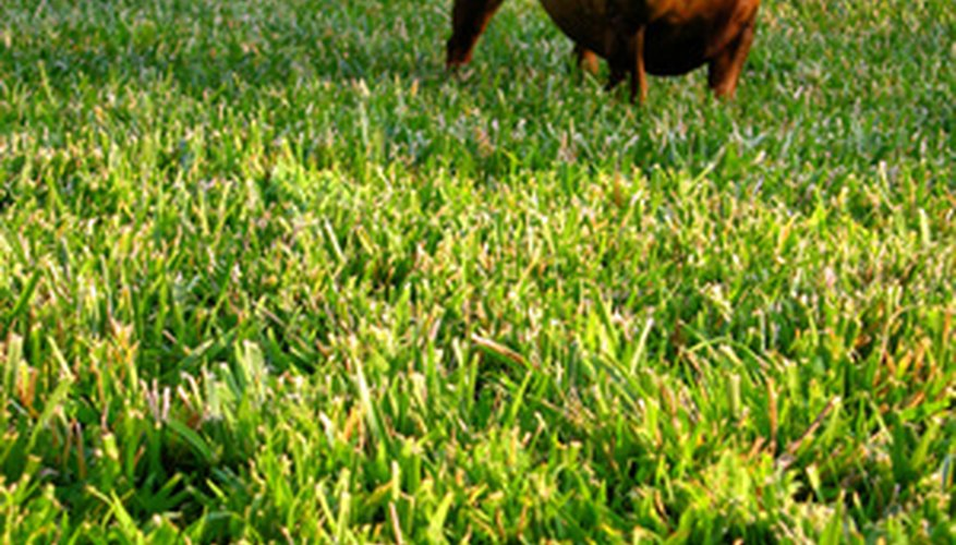 Keep pets off the lawn for 24 hours after applying Scotts lawn fertilizer.