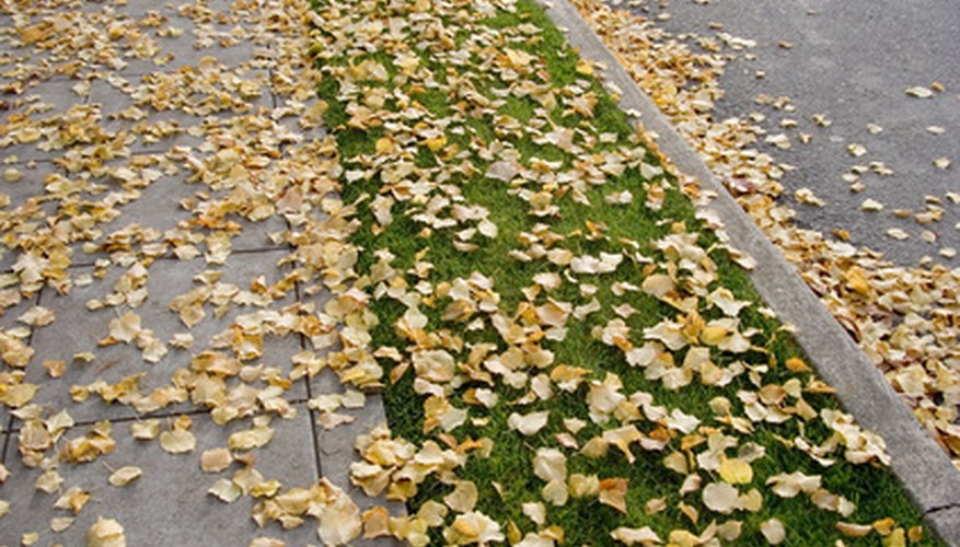 The sides of a sidewalk can be trimmed with an edger.