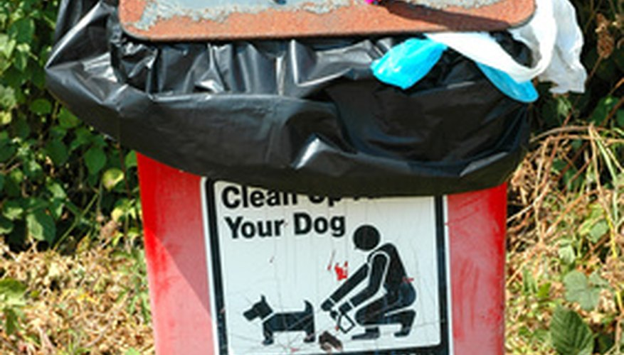 Place the dog feces in a plastic bag for easy disposal.