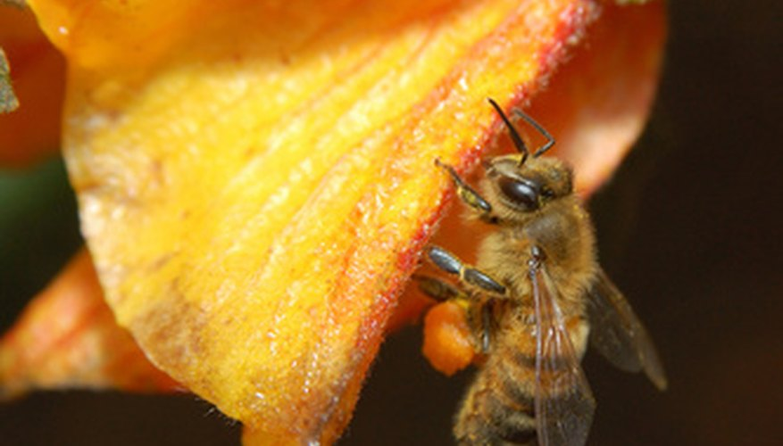 Honey bees like to nest in trees.