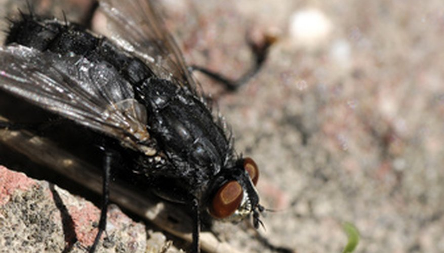 Flies often inhabit compost piles with food or manure waste.