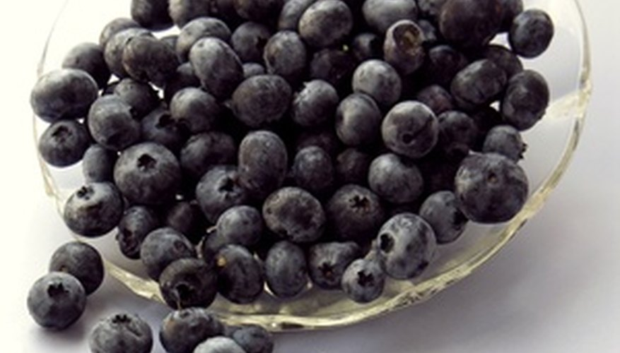 Fresh blueberries can be grown in any garden.