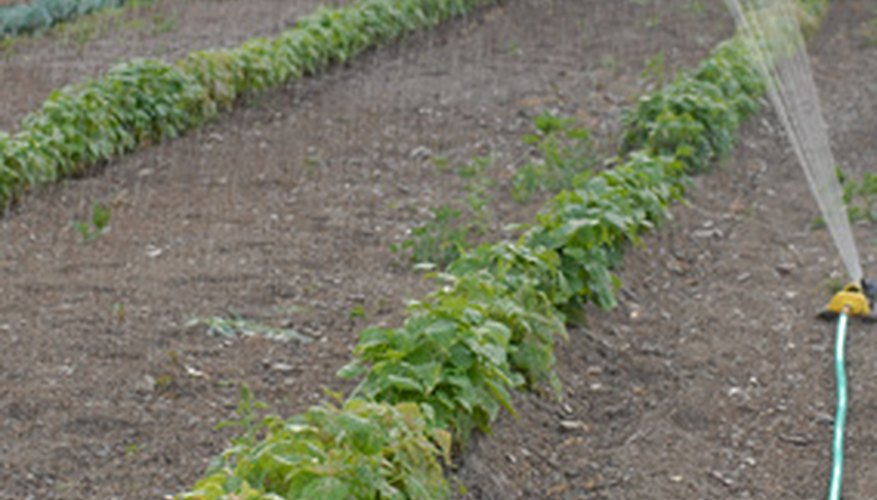 Factors such as soil type, climate and plant requirements help determine proper irrigation.
