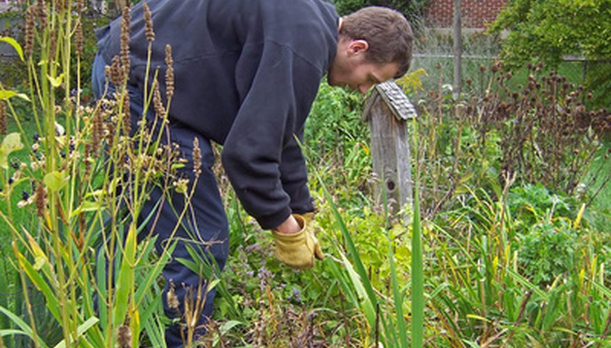 Hand-pulling weeds is a traditional but effective control method.