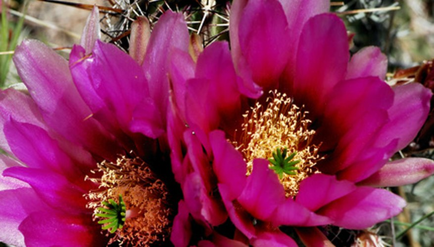Color your Arizona landscape with flowers cactus and trees alike.