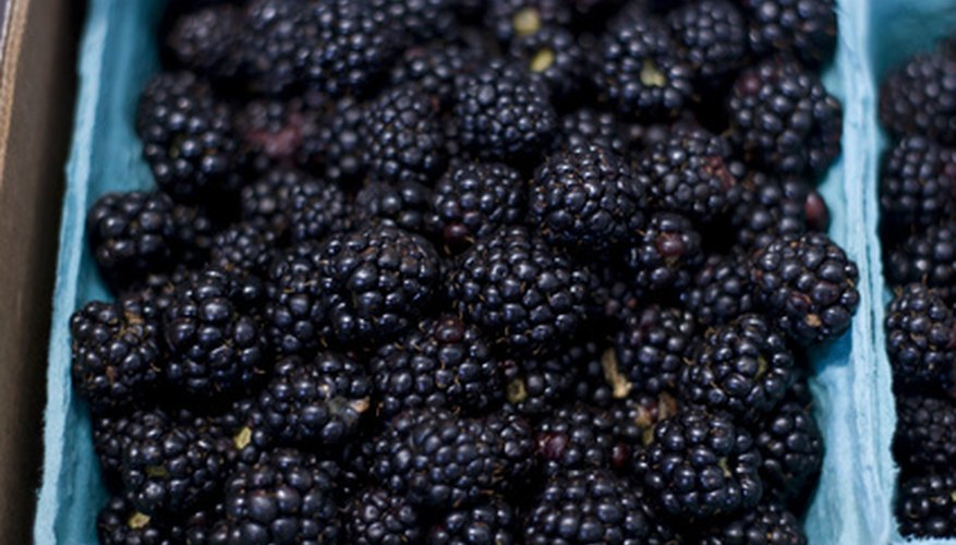 Blackberries have been used both in the kitchen and as a cure for common ailments.