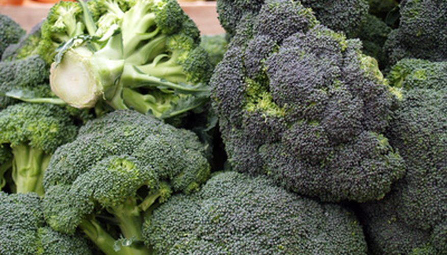 Broccoli is a cool-weather crop that does poorly in hot summer weather.