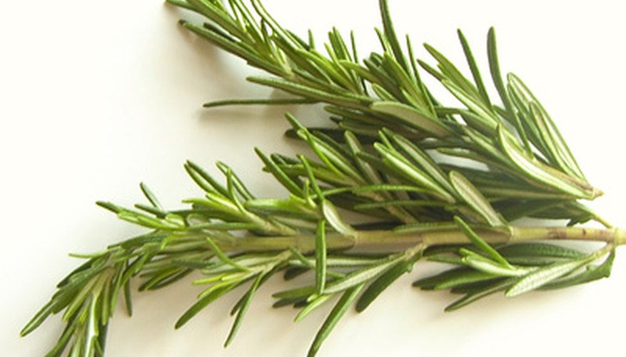 A healthy rosemary plant is worth caring for.