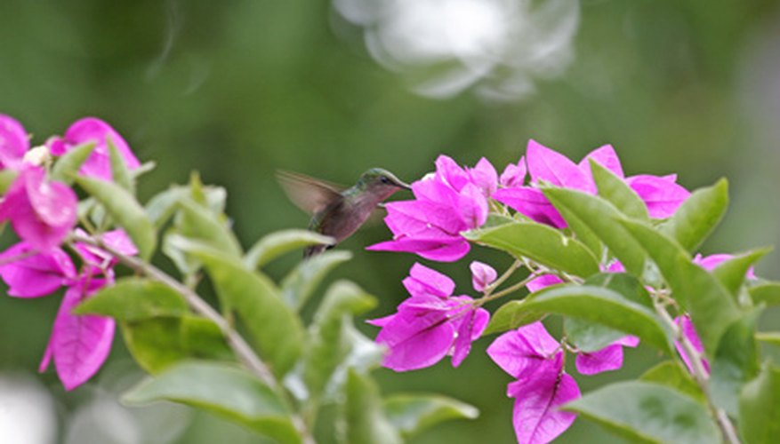 Attract hummingbirds with nectar-rich flowers.