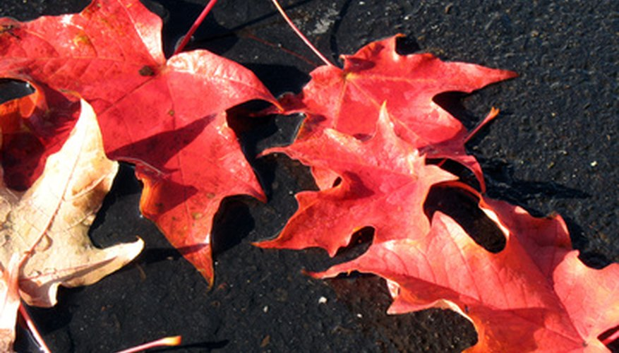 Fall leaves are beautiful on a nature collage.