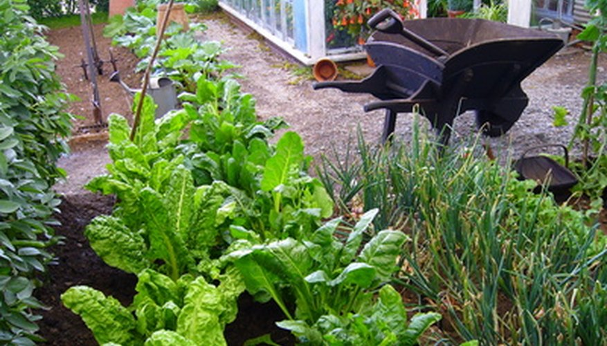 Raised beds can be constructed from recyled material.