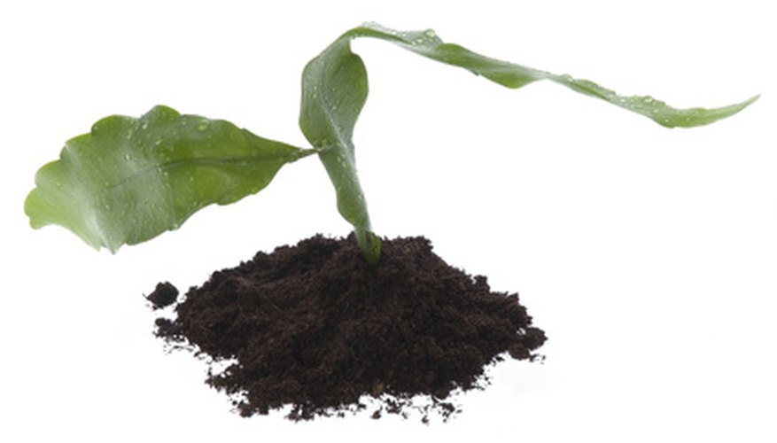 Compost is dark brown or black.
