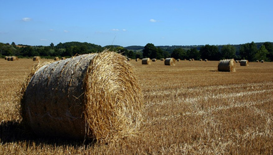 Orchard grass is most commonly used as a silage or hay.