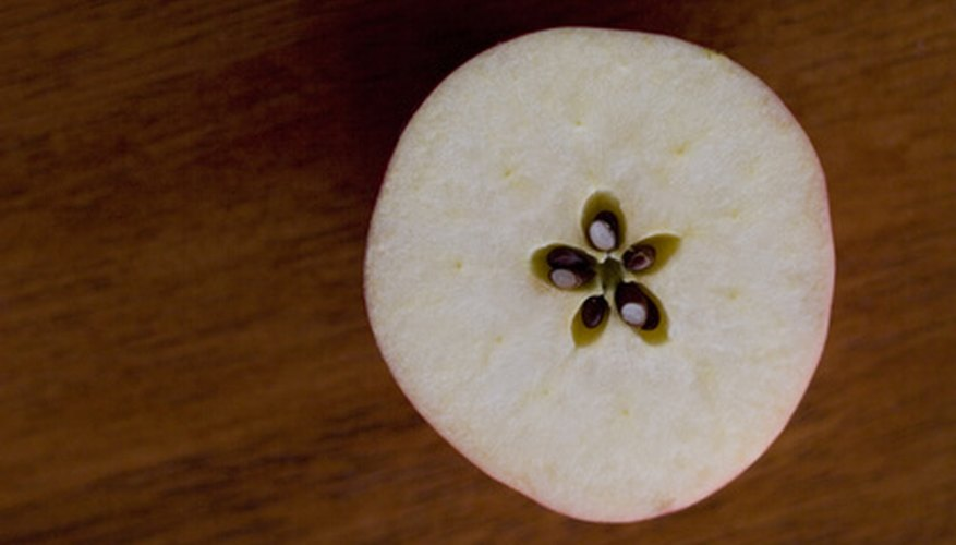 Many people question whether or not an apple tree can be grown from the seeds found in an apple.